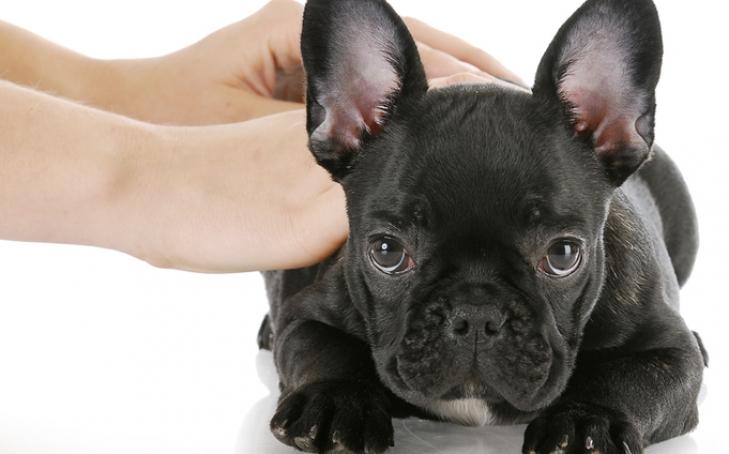 Who Needs Animal Massage?