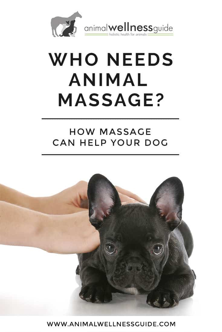 Learn why animal massage therapy is a wonderful therapy for all pets.