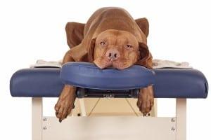 Animal massage benefits
