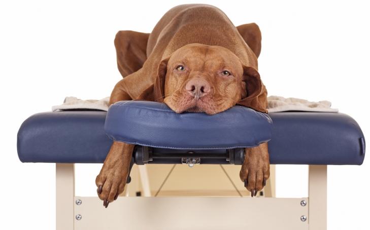 12 Animal Massage Benefits in Short