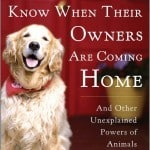 Dogs-that-know-when-their-owners-are-coming-home