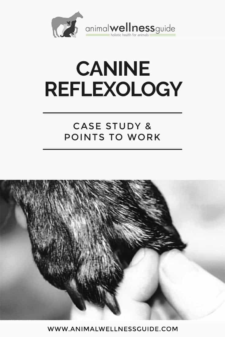 Buddy the Lab Goes Blind - Reflexology to the Rescue. Case study and examples of how to do reflexology with dogs.