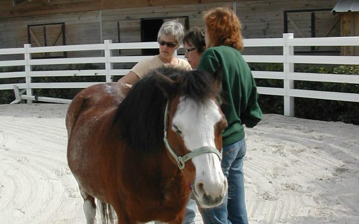 Featured School: Tallgrass Animal Acupressure Institute