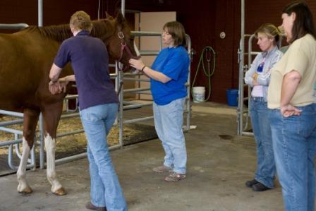 horsemassage