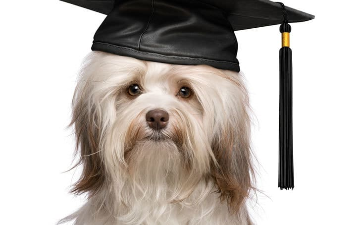 Comparison of Canine Massage Certificate Programs in the US