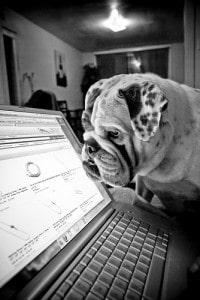 Holistic animal health online classes list by Animal Wellness Guide
