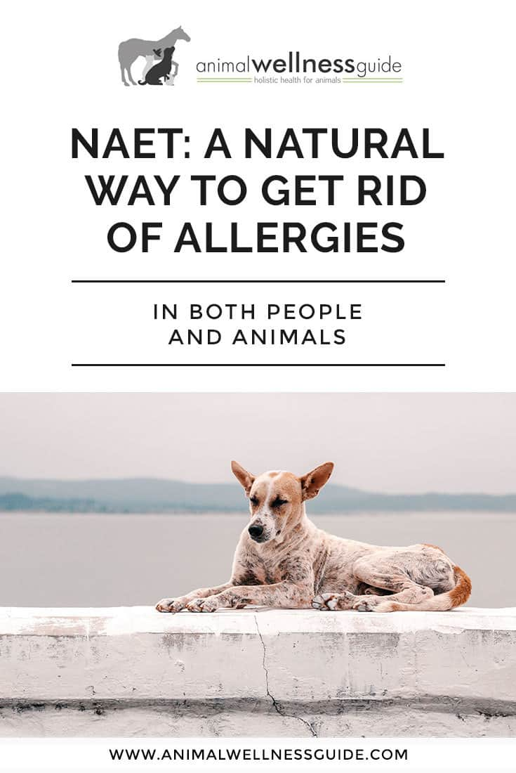 NAET: How to get rid of allergies in people and animals. Does this natural allergy relief remedy actually work?