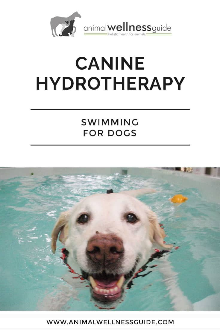 Time to take your dog swimming? Learn about Canine Hydrotherapy - Swimming for Dogs - and which health issues it can help with.