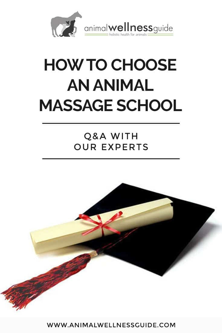 What to look for when choosing an animal massage school