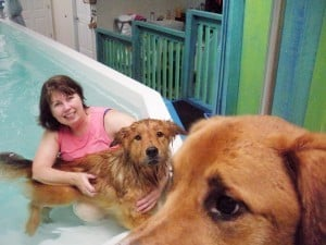 Canine Hydrotherapy - Mikfu and Capone