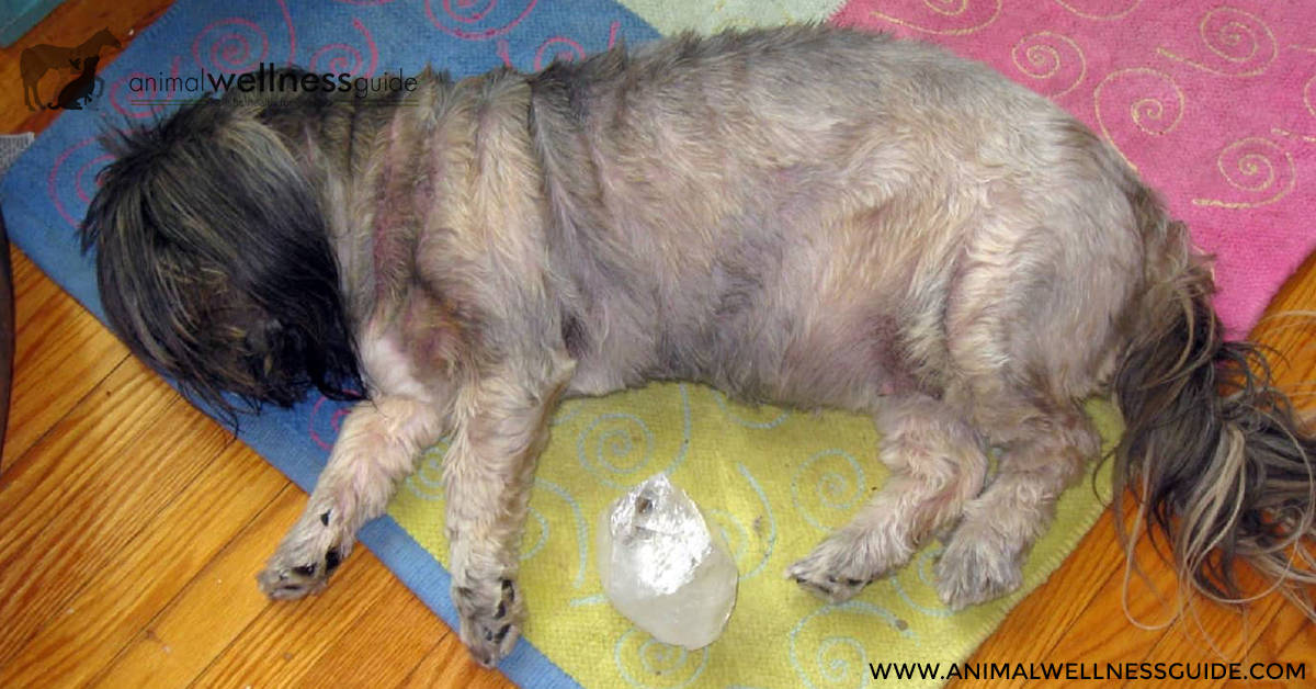 Crystal Healing For Animals Animal Wellness Guide