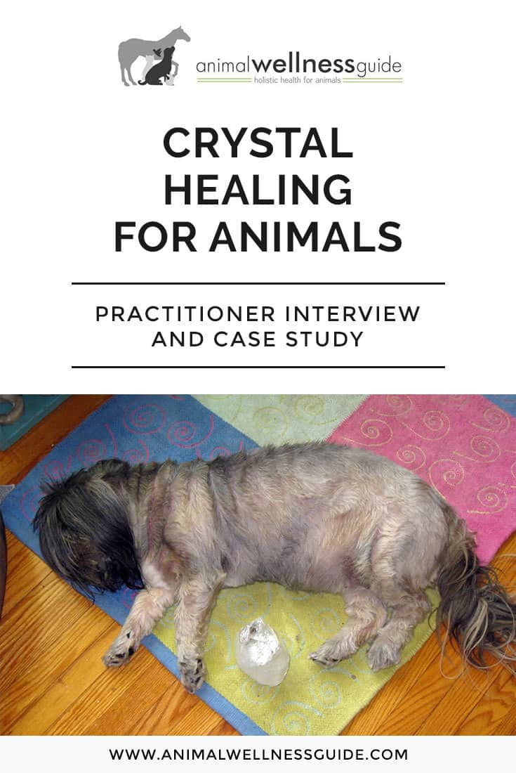 How to use crystal healing with animals with a sample session treating Seborrhoea and injuries and cleansing the organs.