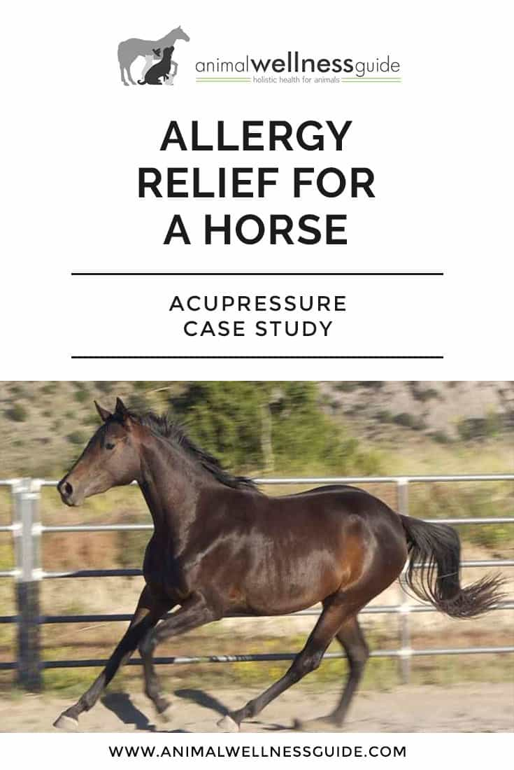 Case study where the practitioner shares how she used acupressure to provide allergy relief for a horse.