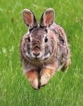 Massage And Acupressure Treatment For Rabbit Digestion