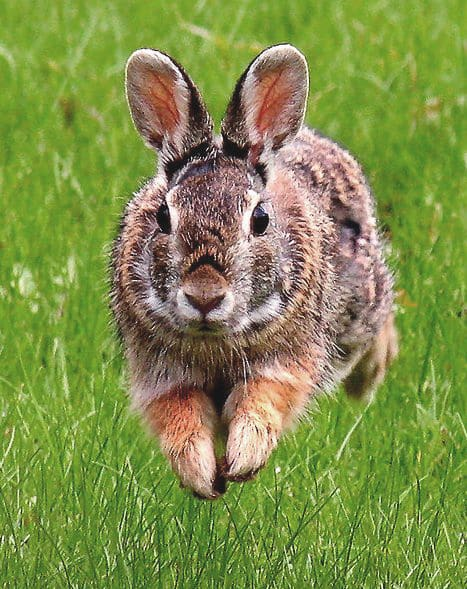 Massage and acupressure for rabbit digestion
