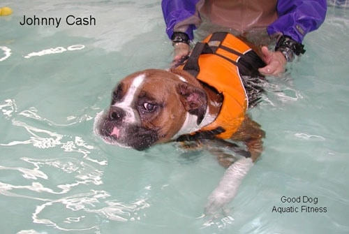 Canine hydrotherapy at Good Dog Aquatic Fitness