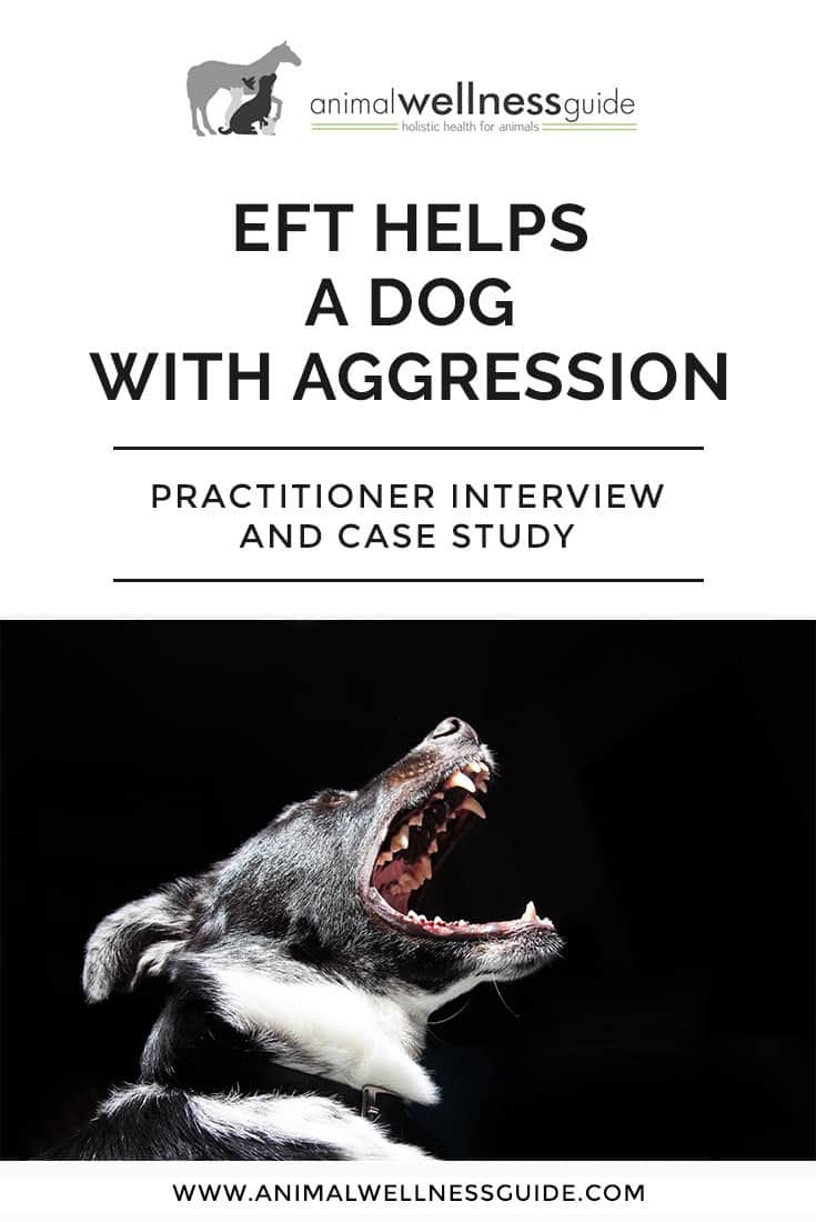 Learn about EFT tapping therapy: what it is, points to tap, and how to do eft on animals. Emotional Freedom Technique practitioner interview and how eft helped a dog with aggression.