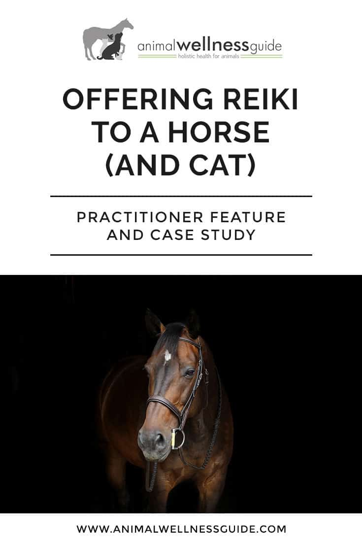 Offering Reiki To A Horse (And Cat): Animal Reiki practitioner feature and case study
