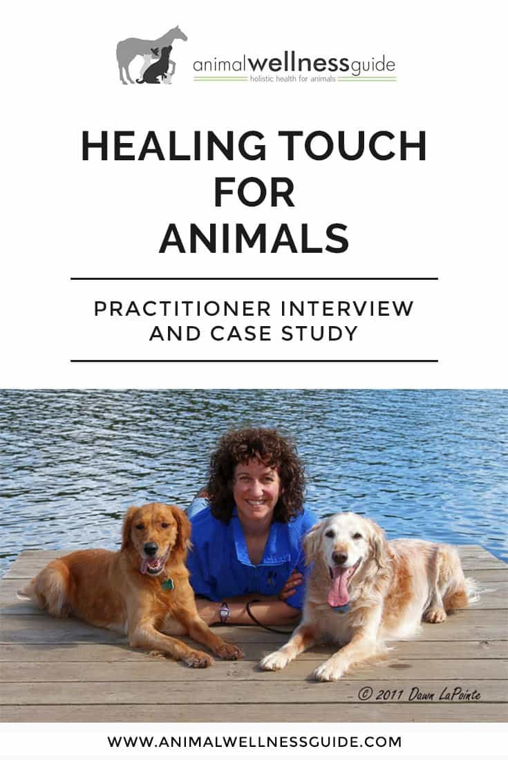 Learn about Healing Touch Therapy for animals and how it helped calm a dog's thunderstorm anxiety.