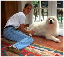 Massage Helps A Samoyed Get Back On His Feet And A PBGV With Epilepsy