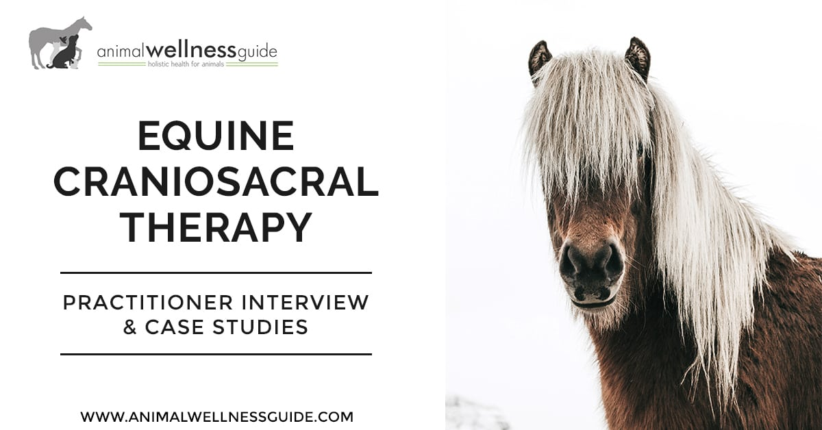 Equine Craniosacral Therapy Animal Wellness Guide