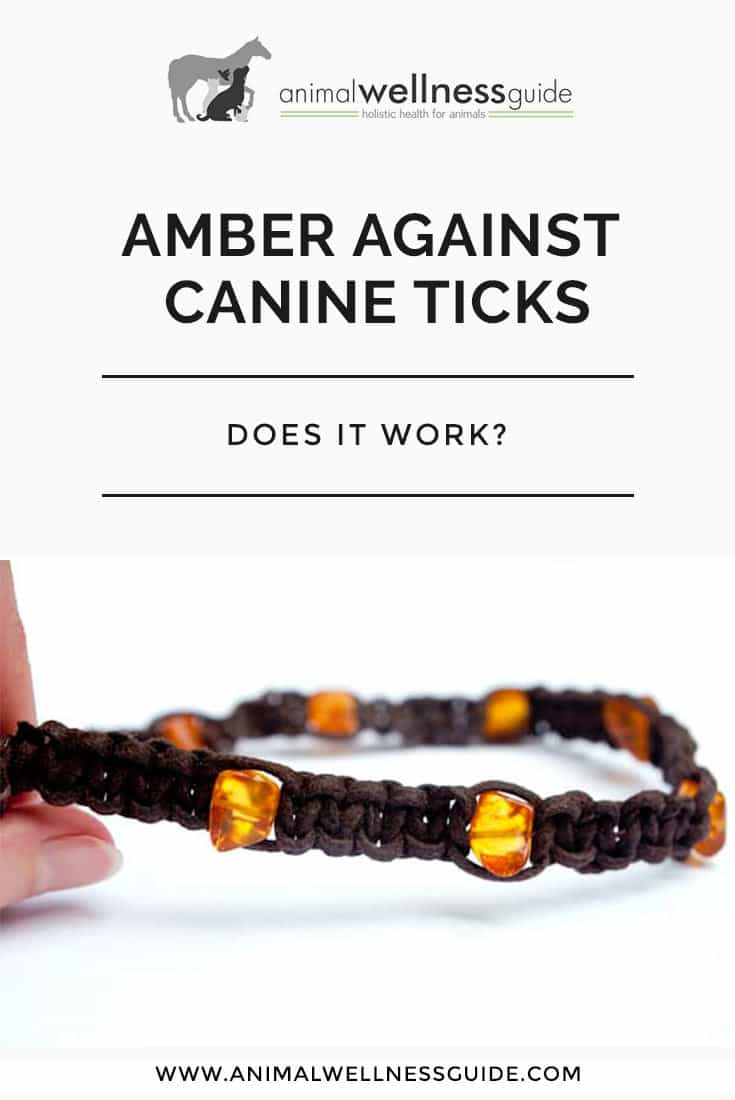 Can amber collars prevent ticks on dogs? We test this natural tick prevention method and our readers share their experiences as well.