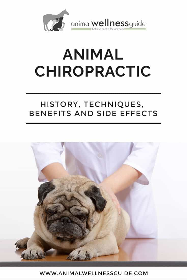 Learn more about chiropractic adjustments for animals.