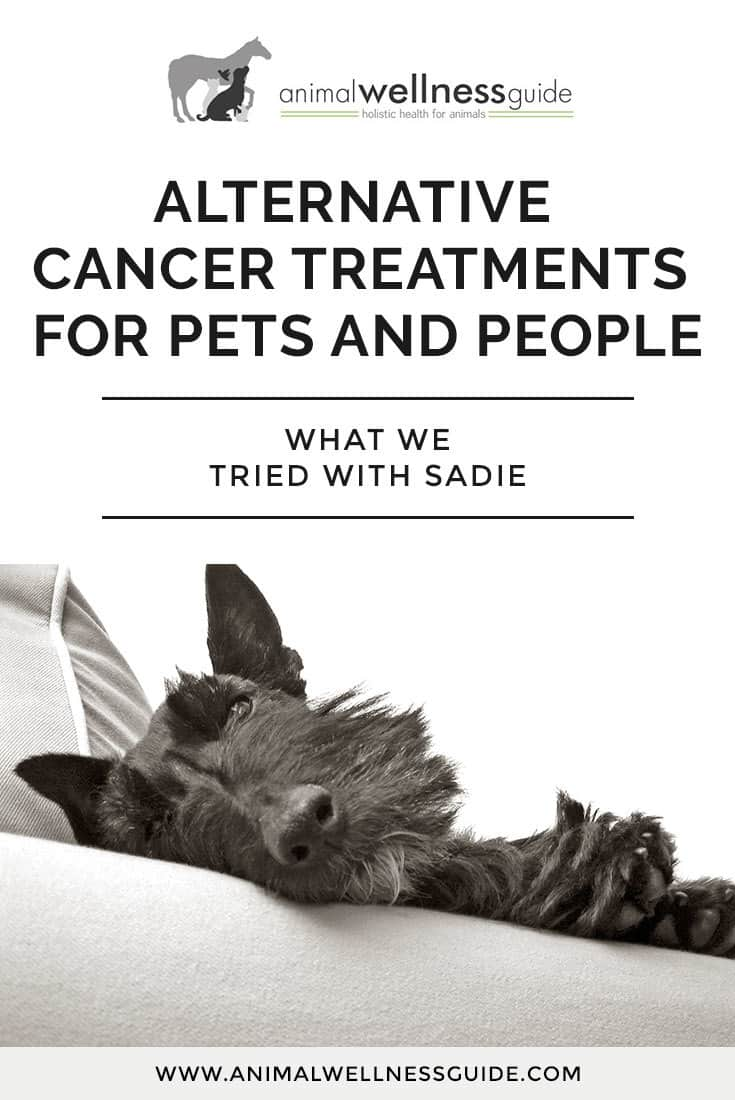 Cancer herbs for dogs - The Natural Alternative Cancer Treatments We Used With Our Dog And The Science Behind Them