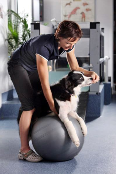Animal Physiotherapy: Stability