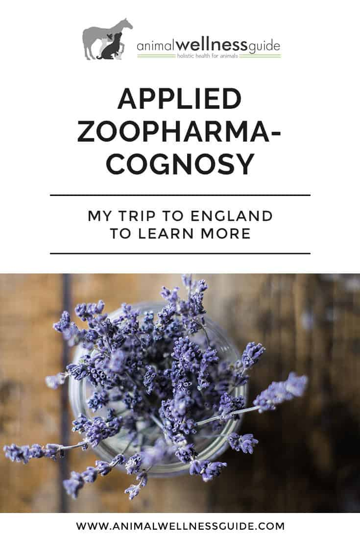 Applied Zoopharmacognosy and My Trip to England | Helping Animals Heal Themselves