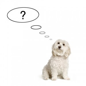 Dog with question
