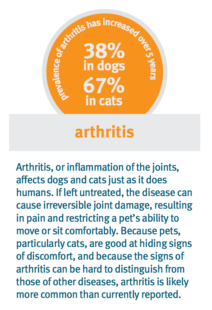 Arthritis in dogs and cats