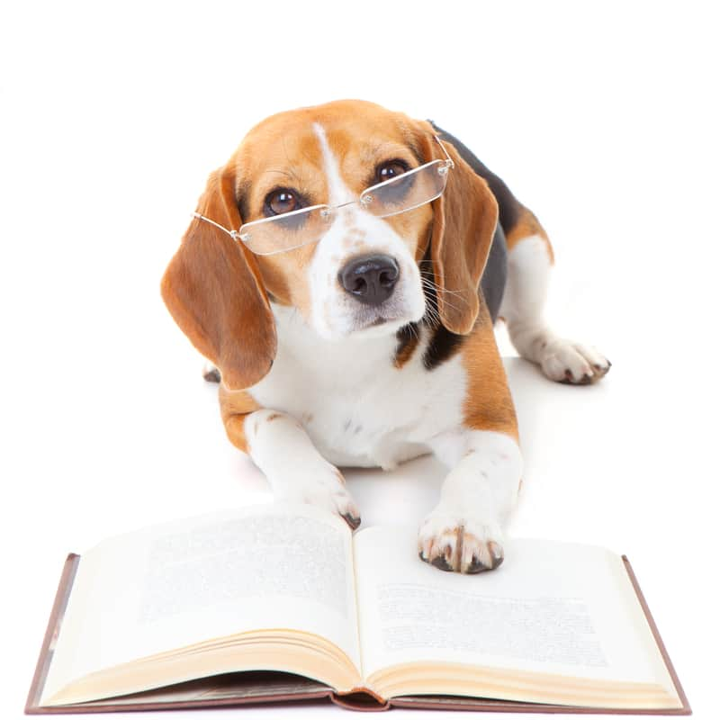 Business Monday: Animal Massage Laws and Practitioner Liability Insurance in Ontario, Canada