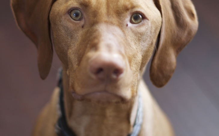 Friday Links: Canine OCD, Immunotherapy, and Mind-Controlling Parasites