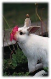 Flower essence: Rabbit