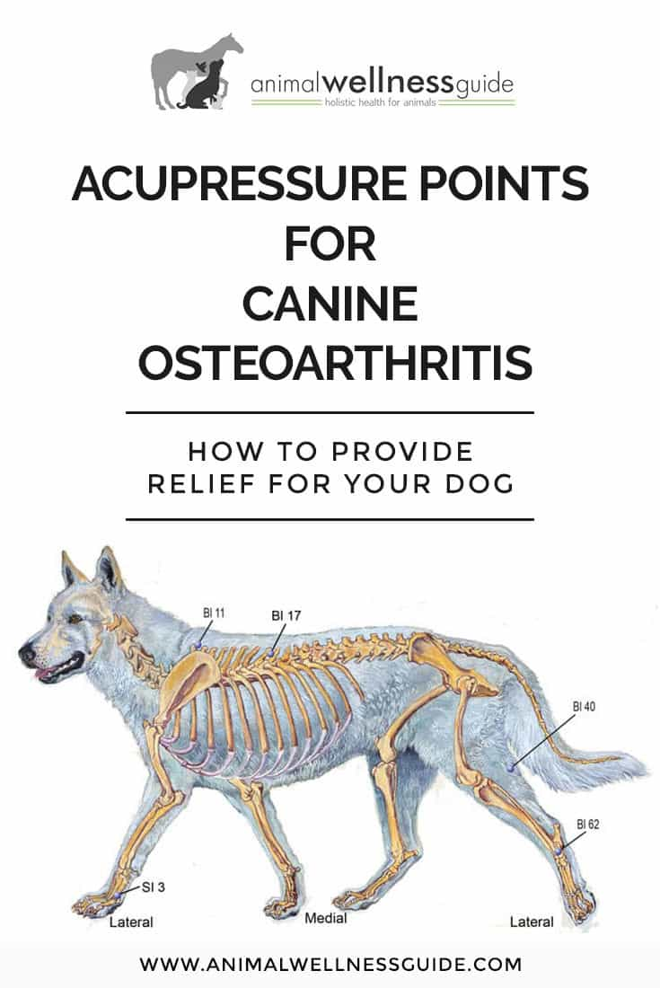How to provide natural arthritis relief for dogs with the help of acupressure