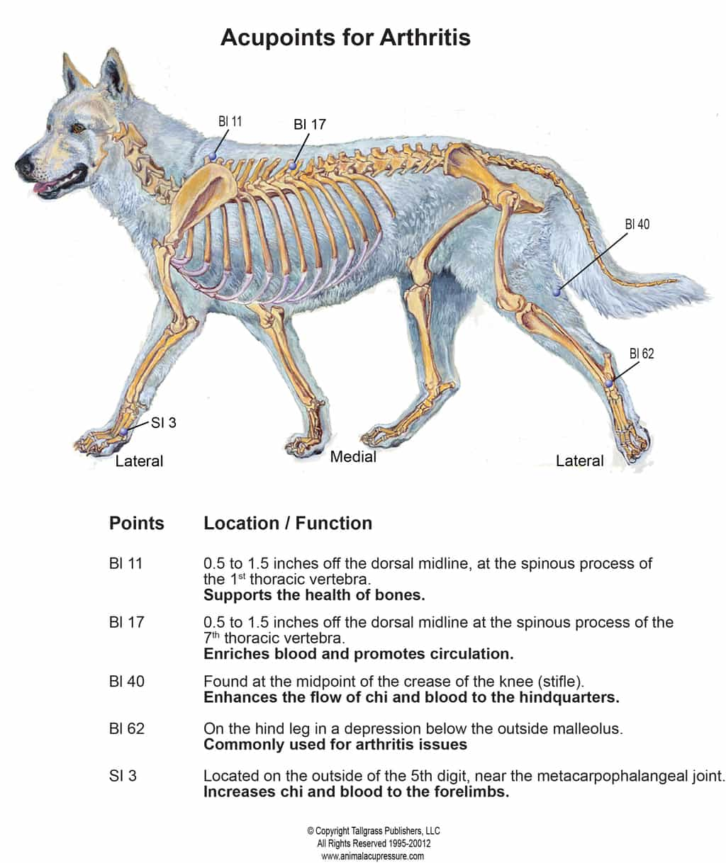 Acupressure points for Canine Arthritis