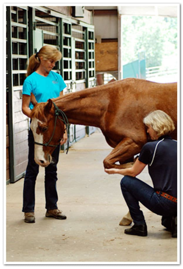 Equine Manual Ligament Therapy