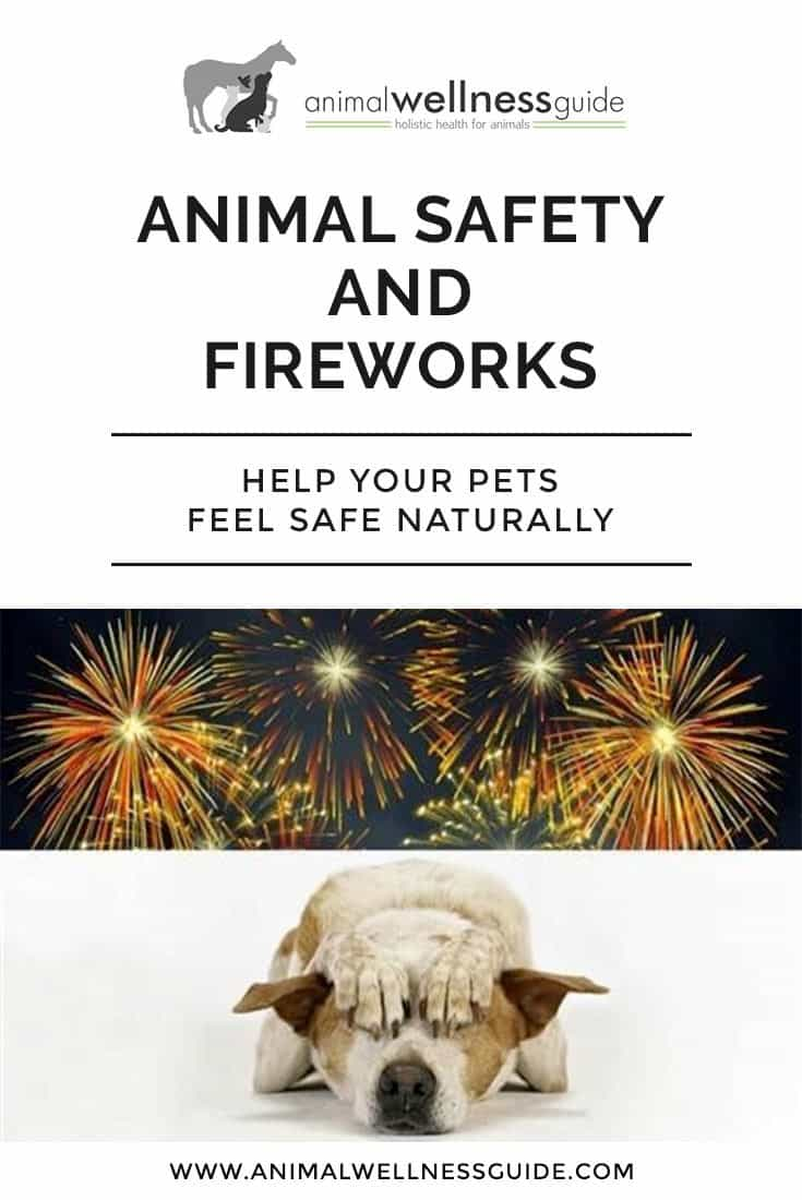 How to help pets that suffer from stress, fear and anxiety during fireworks.