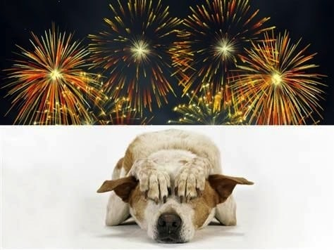 Animal safety: Dog and fireworks