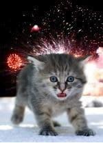 Kitten and fireworks