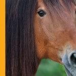 Acu-Horse-feat-img