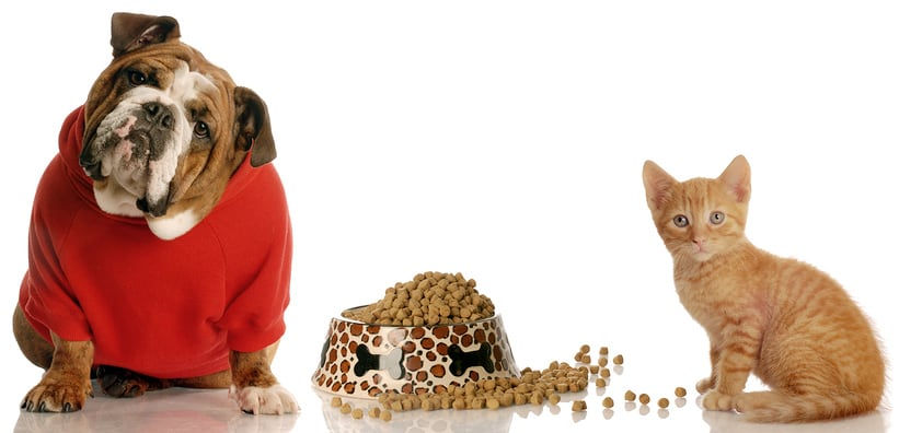 Commercial Pet Food Not Good For Your Pet