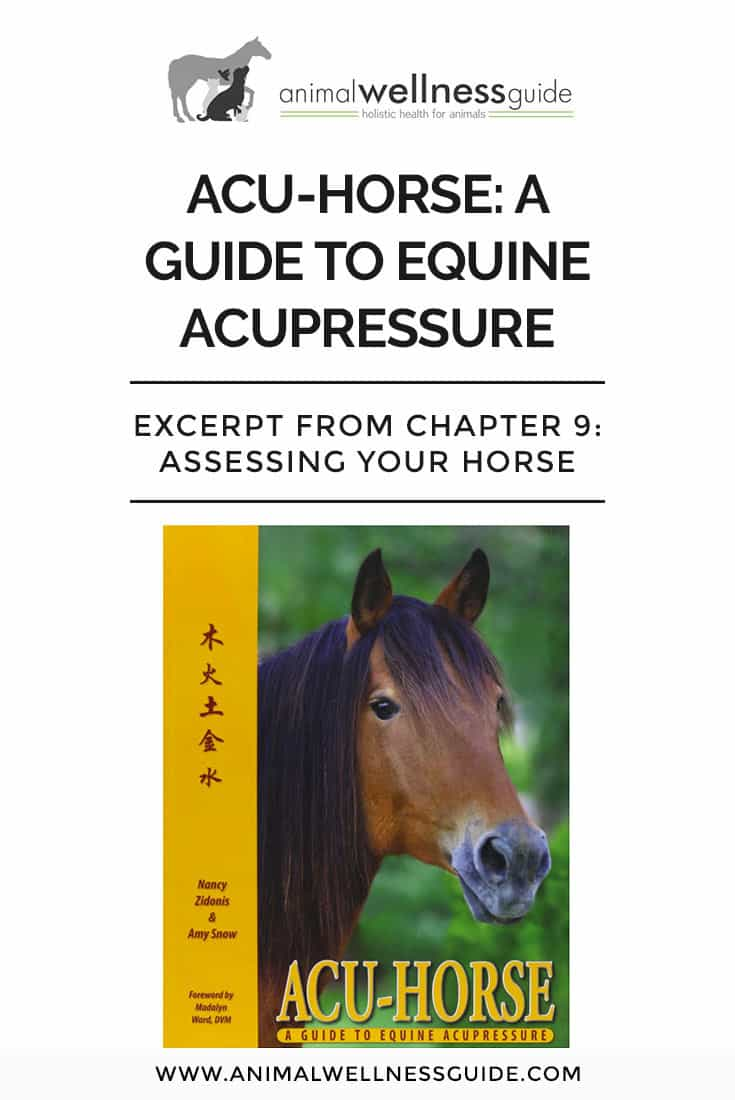 This excerpt from Acu-Horse: A Guide to Equine Acupressure talks about how to detect pain in your horse before it becomes a bigger problem.