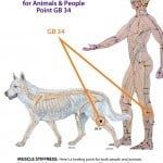 Dog Human Gall Bladder 34