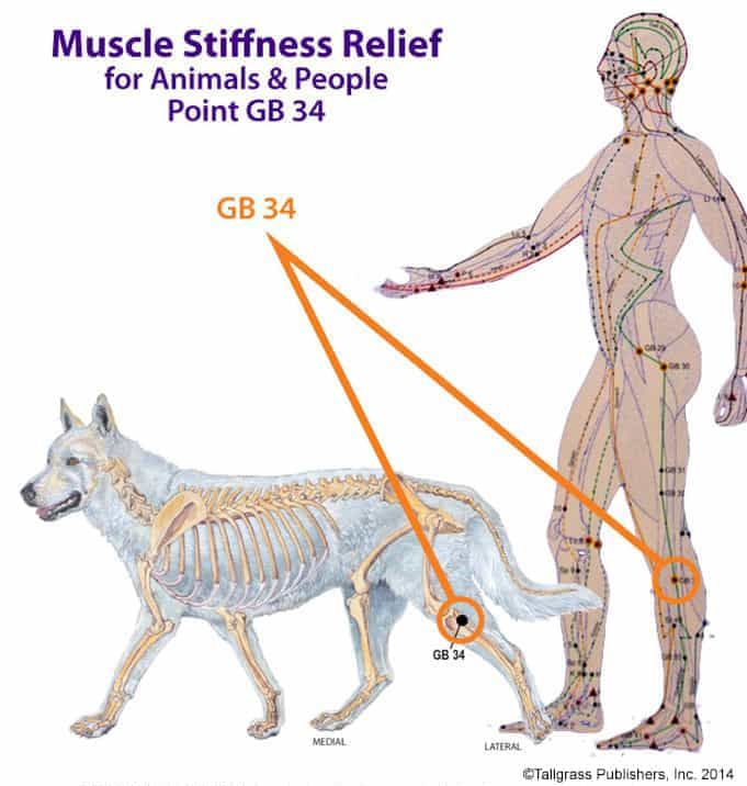 Canine And Human Help for Stiff Limbs
