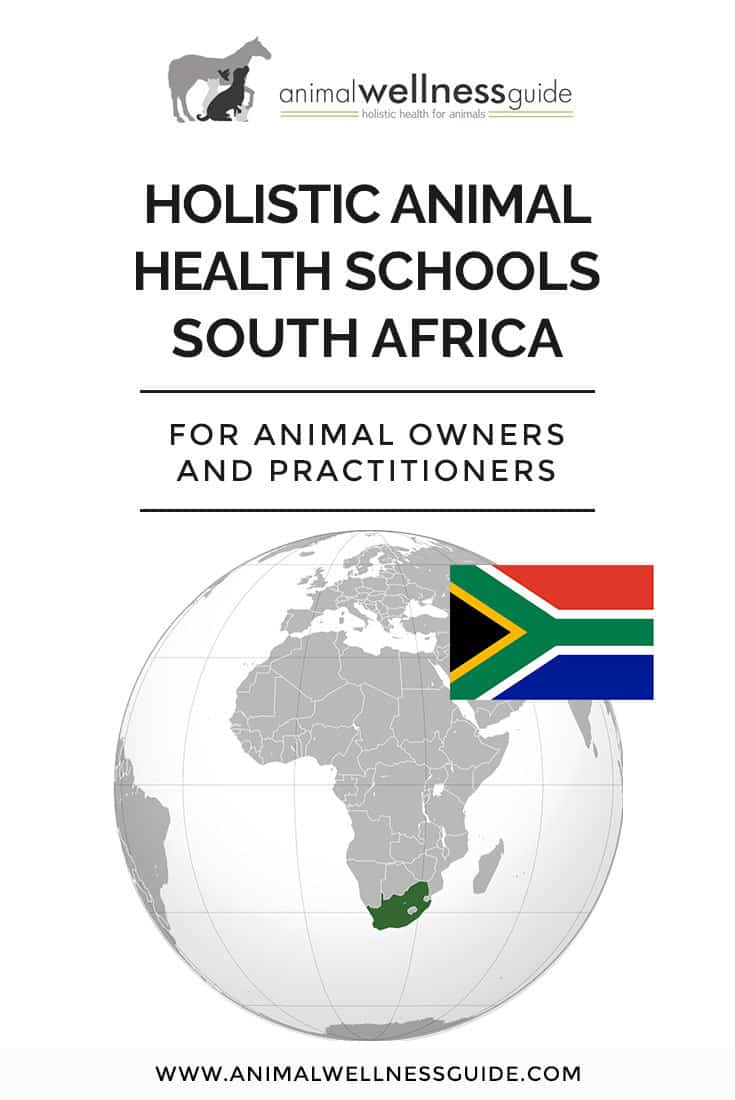 Interested in a holistic animal health career in South Africa? Check out our list of schools that teach a variety of integrative health therapies for animals (and we have school lists for USA, Canada, UK, Australia, New Zealand and Europe too!)