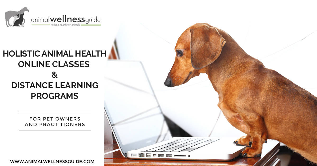 Holistic Animal Health Online Classes And Distance
