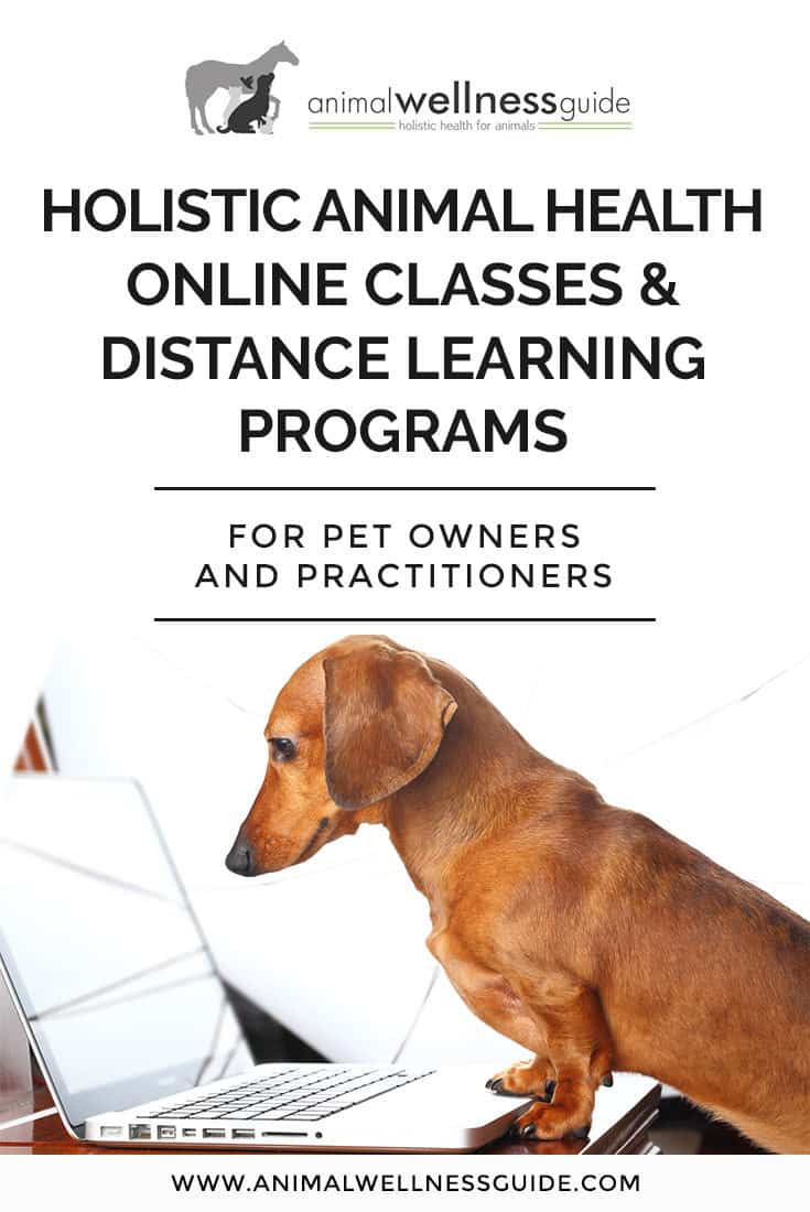 Our list of animal health online courses and distance learning programs. Classes include everything from natural healing to business for practitioners.