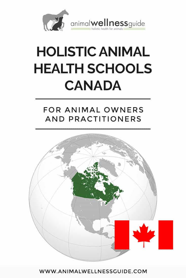 Interested in a holistic animal health career in Canada? Check out our list of schools that teach a variety of integrative health therapies for animals (and we have school lists for USA, UK, Australia, New Zealand and Europe too!)